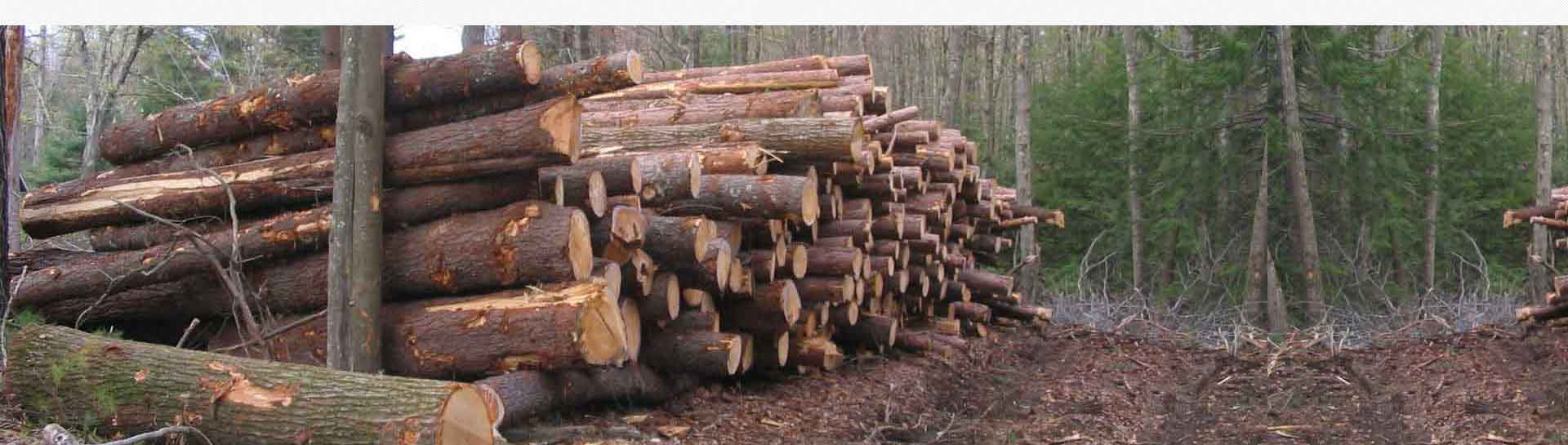 meranti logs at ASCO Enterprises