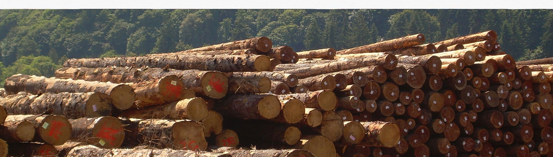 red meranti logs at ASCO Enterprises